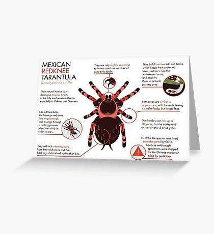 Infographic: Mexican redknee tarantula  Greeting Card