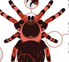 Infographic: Mexican redknee tarantula  Sticker