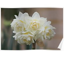 1st Flowers Of Spring Poster