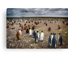 Penguin Colony Canvas Print