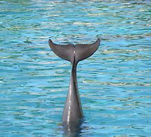 Dolphin Tail by Leanne Allen