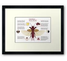 Infographic: European Mole Cricket Framed Print