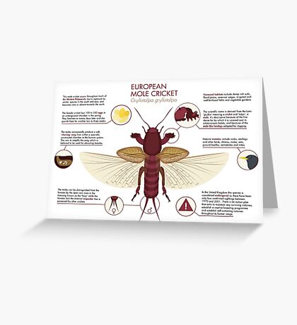 Infographic: European Mole Cricket Greeting Card