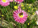 It's A Bee's Life by John Douglas