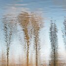 H2O Tree Reflections by TheWalkerTouch