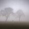 NO VISIBILITY ♦ Fog, Mist, Smoke & Smog ♦