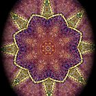 Digital Mandala : Colour Coded vignette by danita clark