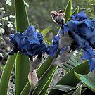 Blue Iris Flower by eliz134