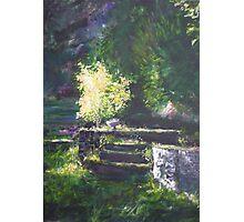 A quiet corner in the garden Photographic Print