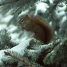 Charlie The Red Squirrel by eliz134
