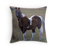 Pasture Pinto Throw Pillow