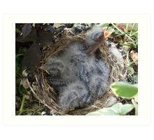 Babies in the nest. (In one of my planters) Art Print