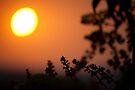 reaching sun! by Dinni H