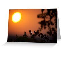 reaching sun! Greeting Card