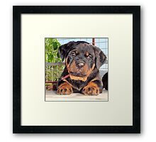 Mollie: A Puppy Portrait Framed Print