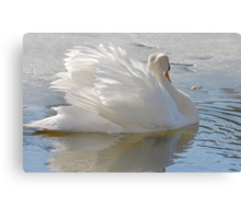 A Swans Beauty Canvas Print