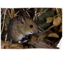 The field mouse Poster