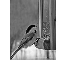 Lite Lunch Photographic Print
