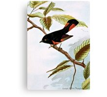Redstart Bird Illustration Canvas Print