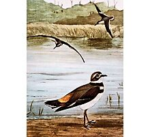 Sandpiper and Killdeer Birds Photographic Print