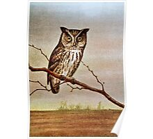 Screech Owl Vintage Illustration Poster