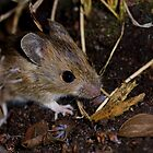 Field mouse by AngiNelson