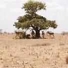 Shade in desolation by CriscoPhotos