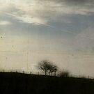 Lines by rosedew