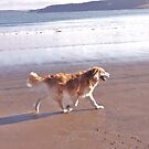 saz running across the beach by xxnatbxx