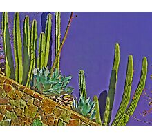 Purple Planting Photographic Print