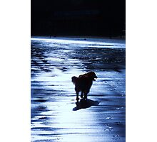 midnight Photographic Print