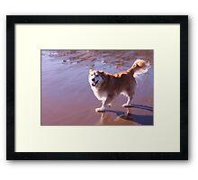saz at the beach Framed Print