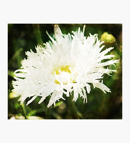 Fluffy White Photographic Print