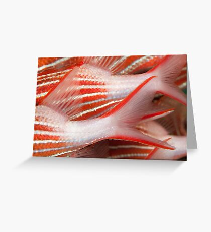 Fish Tails Greeting Card