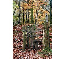 Autumnal Woodland Photographic Print