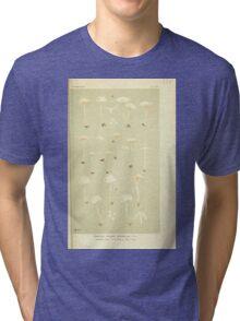 Illustrations of British Fungi by Mordecai Cubitt Cook 1891 V3 0191 AGARICUS  ENTOLOMA  SERICELLUS Tri-blend T-Shirt