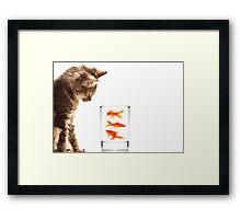 A kittens curiosity Framed Print