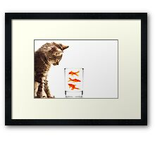 A kittens curiosity Framed Print