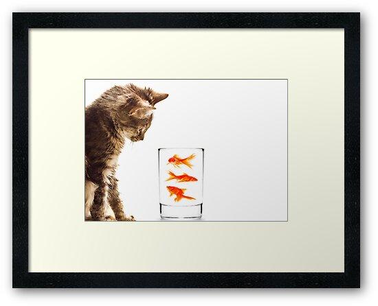 A kittens curiosity by Ella Hall