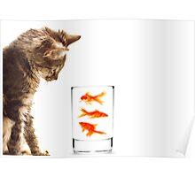A kittens curiosity Poster