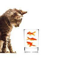 A kittens curiosity Photographic Print