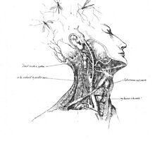 Untitled (Arteries of the Neck) by MissJones
