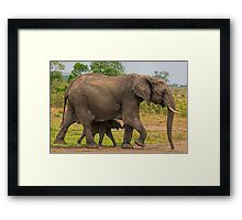 Elephants - Baby with Mother Framed Print