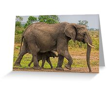 Elephants - Baby with Mother Greeting Card