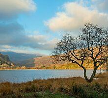 Llyn Gwynant and Tree by Nick Jenkins