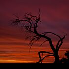 Mungo Sillhouette by Neil