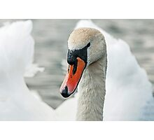 Mute Swan and Water Droplets Photographic Print