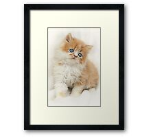 Softness Framed Print