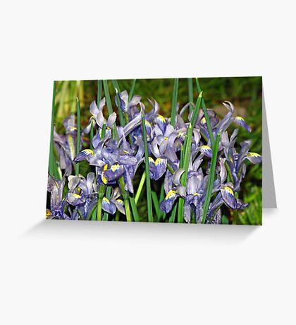 Saucy Irises Greeting Card