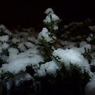 Shrub in Icy Snow by seshadri